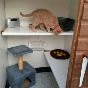Abbey Lodge Cattery Plymouth